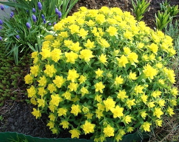 Многолетние цветы цветущие для дачи