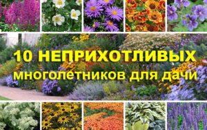 Самые неприхотливые многолетние цветы