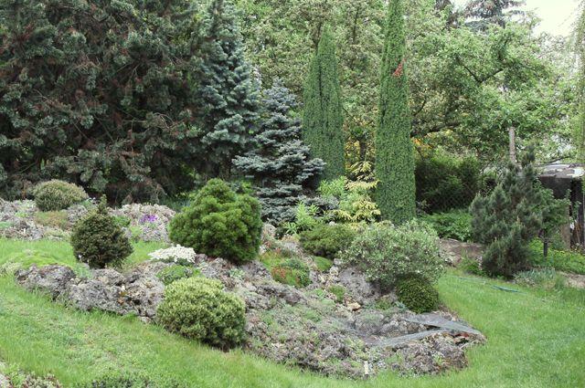 Какие деревья не сажать на дачном участке