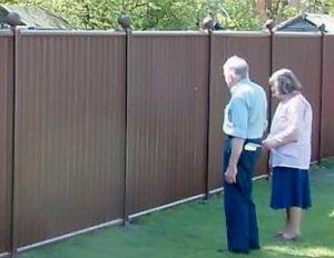 отгородиться от соседей на даче