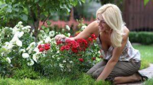 Как нужно сажать розы
