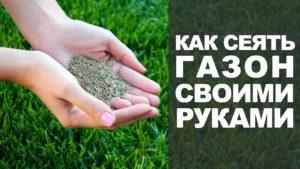 Как сажать газонную траву семенами своими руками