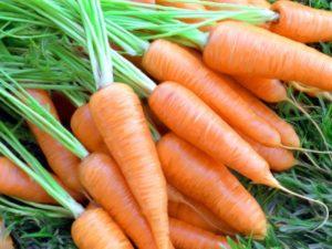 Сажать морковь