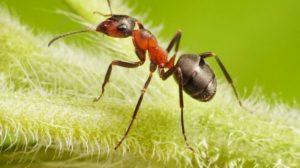 Вывести муравьев на даче