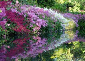 тенелюбивые цветы для дачи и их фото