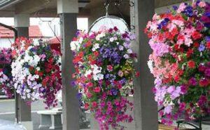 Как оформлять и выращивать цветы в вазонах