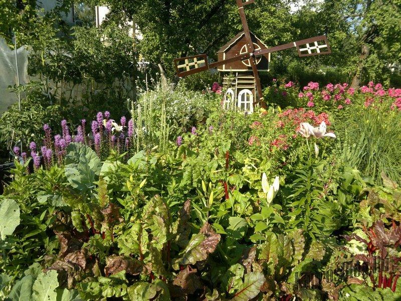 Порядок на грядках: какие растения несовместимы друг с другом 18