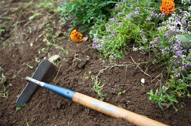 Как сажать цветы полнолуние 498