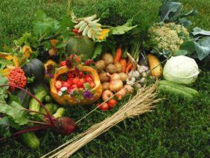 сажать овощи и фрукты в полнолуние