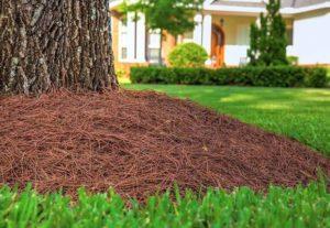 Мульчирование огорода сосновыми иголками