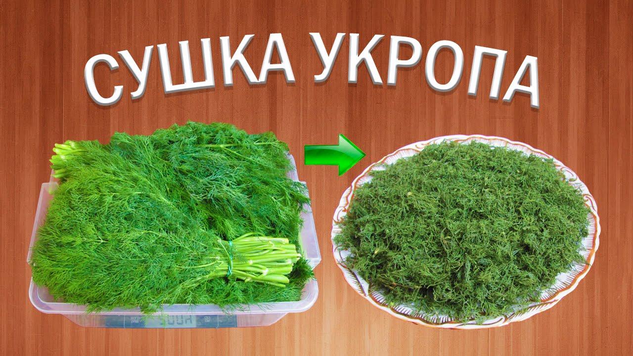 Как сушить петрушку в домашних условиях – сушеная зелень и корень петрушки на зиму