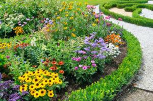 Какие цветы лучше посадить на клумбе на даче