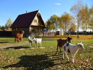 Каких животных выгодно разводить на ферме