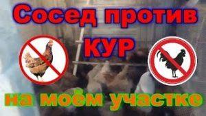 Можно ли в России держать кур на даче по закону в 2021 году